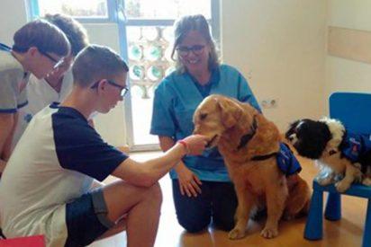 ¿Sabías que el Hospital Vall d'Hebron trata con perros a niños con síndrome alcohólico fetal?
