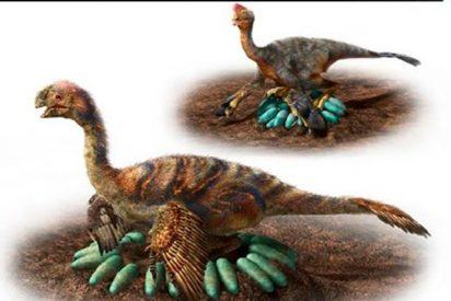¿Sabes cómo empollaban sus huevos los pesados dinosaurios?