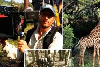 Una jirafa aplasta el cráneo a un director de cine cuando rodaba unos primeros planos del animal