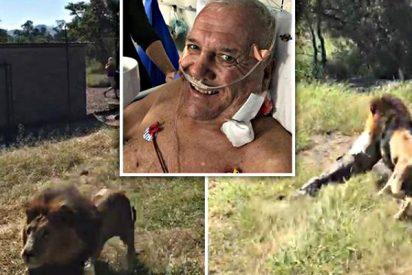El dueño de un safari, malherido tras el ataque de un león al que crió desde que era un cachorro