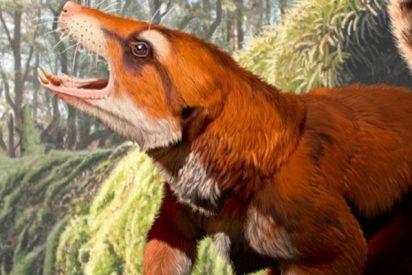 El fósil de este mamífero recientemente hallado obliga a replantear uno de los mayores procesos geológicos