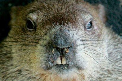 """Policía mata a tiros a una marmota en una carretera por considerar que """"no actuaba normal"""""""