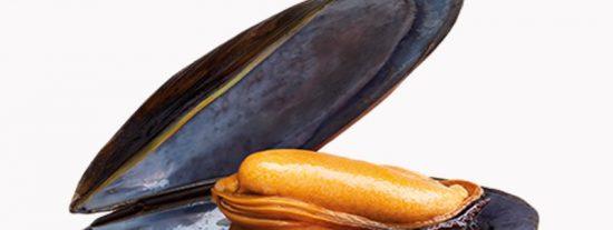 Drogas: Pescan mejillones que dan positivo en opiáceos en la costa noroeste de EEUU