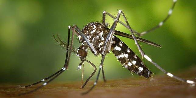 """Alertan de que este verano habrá """"fuertes"""" plagas de mosquitos y mosca negra debido a la lluvia de la primavera"""