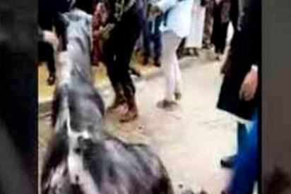 Muere un caballo en la Feria de Sevilla tras pasar todo el día sin comer ni beber