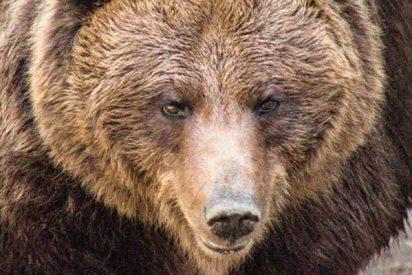 Selfie: El oso mata al taxista que paró para fotografiarse con él