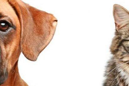 Descubren la primera evidencia de que los animales son capaces de recordar hechos pasados