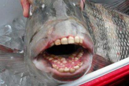 """Sorpresa e incertidumbre ante la captura en EE.UU. de este """"extraño"""" pez con dientes humanos"""