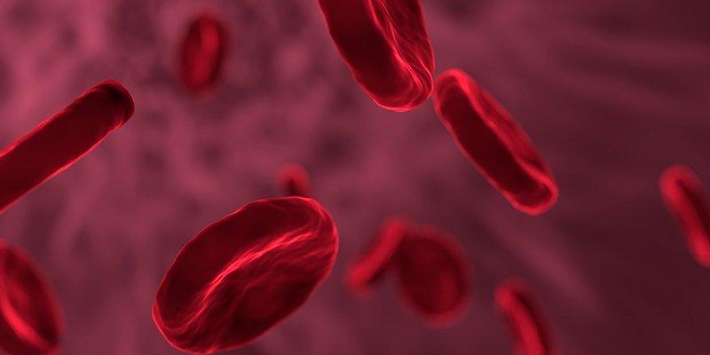 Descubren que células individuales ayudan a crear nuevos vasos sanguíneos tras una lesión