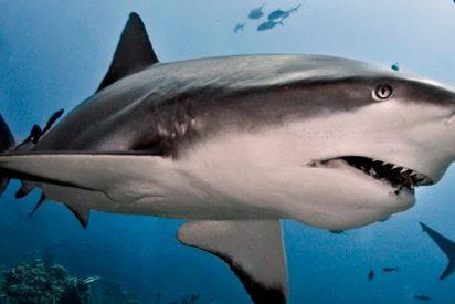 Este tiburón desata la alarma en Fuengirola y obliga a cerrar la playa