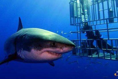 Buceando con el Gran Tiburón Blanco