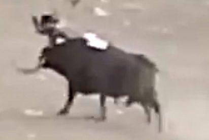 El escalofriante momento en que el toro empitona a un joven y los descuartiza