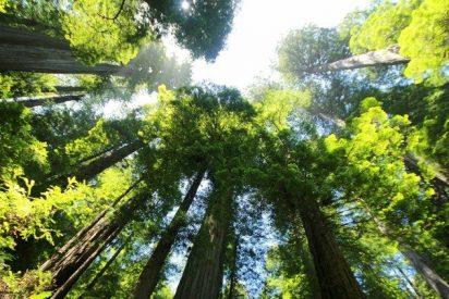 ¿Sabías que la contaminación merma a los hongos que alimentan los árboles europeos?