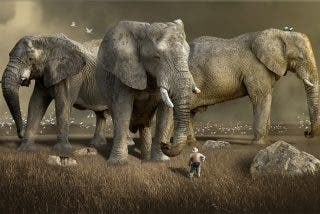 El misterio de la muerte masiva de elefantes
