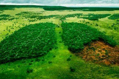 Amazonía: estas son las empresas que dañan el pulmón del planeta