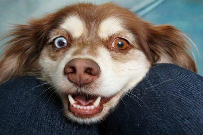 Mascotas: mira como reacciona este perro ante un truco de magia