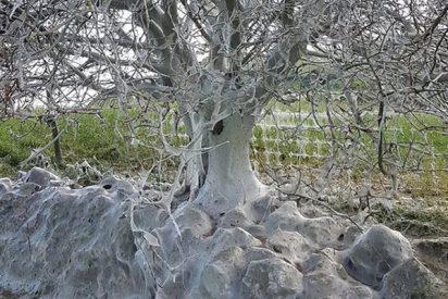 Encuentran en Inglaterra este tétrico árbol