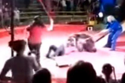 Feroz ataque de un oso a un empleado de circo