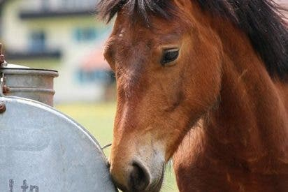 Descubren que los caballos perciben señales emocionales humanas de la cara y la voz
