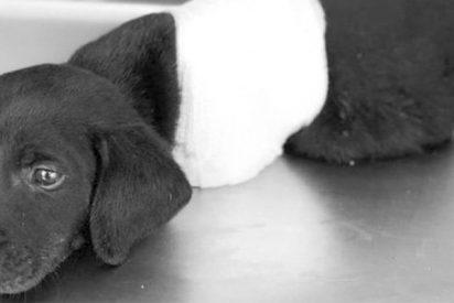El triste final de este cachorro ha revolucionado las elecciones en Turquía
