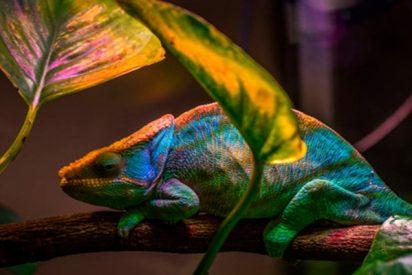 Un nuevo nanoláser que cambia de color inspirado en el camaleón