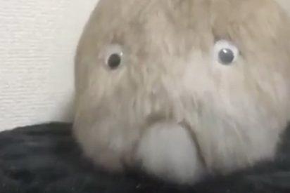 """El conejo más """"cara de culo"""" del mundo…"""