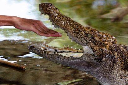Propone matrimonio a su novia dentro de un estanque lleno de cocodrilos y por poco le sale muy caro