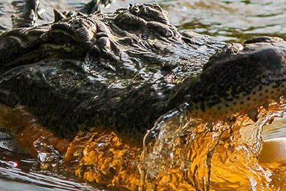 Este peligroso reptil acecha a un niño mientras juega con un cocodrilo inflable