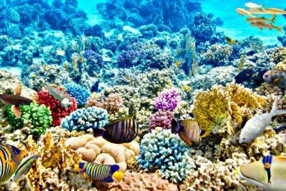 ¿Sabías que los arrecifes de coral reducen a la mitad los daños de las inundaciones?