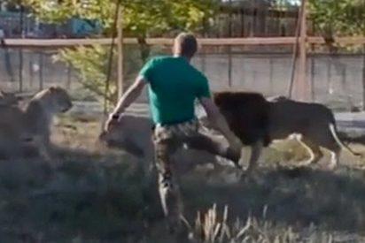 Cuidador de zoo dispersa a un grupo de 7 leones 'armado' con una chancla apestosa