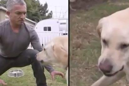 Cuando el encantador de perros recibió la mordida más brutal por fiarse