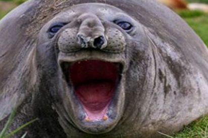 Las divertidas fotografías de animales del concurso 'The Comedy Wildlife'
