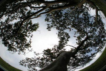 La impresionante estrategia de los árboles tropicales para capturar luz