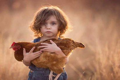 ¿Sabías que los niños pequeños prefieren cuidar a un pollo que a un enfermo?