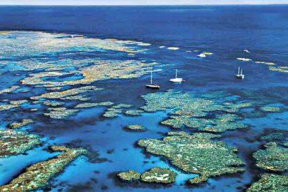 Descubren que la Gran Barrera de Coral ha sobrevivido a cinco cambios ambientales drásticos
