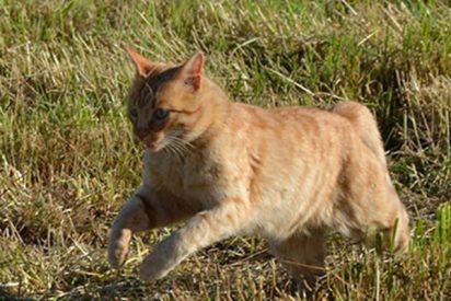Este gato 'invade' el campo durante partido de fútbol y multan a los organizadores con 40.000 dólares