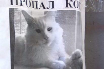 Este anuncio sobre un gato perdido enloquece las redes por una ilusión óptica