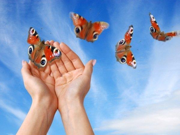 ¿Sabias que unas mariposas recorren 12.000 kilómetros anuales cruzando el Sáhara?