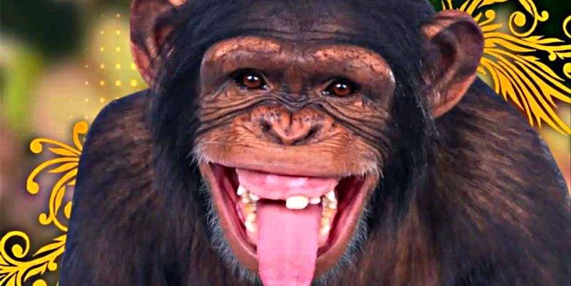 Descubren que los monos que tienen más amigos sobreviven mejor al invierno