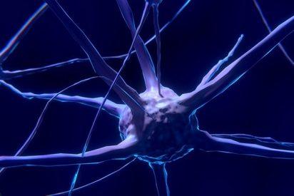 Longevidad: Crean neuronas a partir de una muestra de sangre