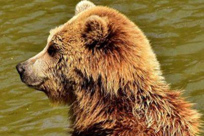 Estos pescadores filman los últimos minutos de vida de su amigo, perseguido por un oso
