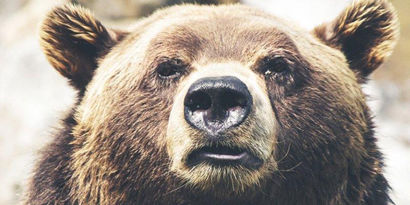 Un hombre temerario se enfrenta a un oso solo con sus propias manos para defender a su perro