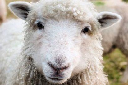 """Dr. Amadeo Muntané Sánchez: Carta al Director.""""Han utilizado al ciudadano como «ovejas sin pastor»"""""""