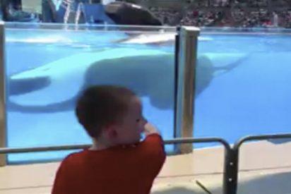 Muchas cosas pueden salir mal en un parque acuático y este vídeo lo demuestra
