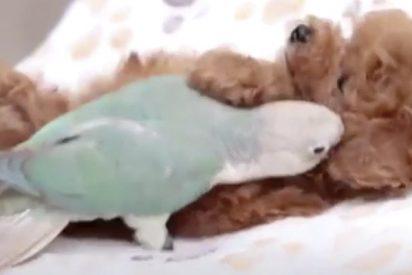 El cachorro y el periquito; dos grandes amigos...