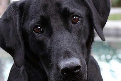 El angustioso rescate de un perro a punto de morir estrangulado por una boa