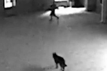 Hay perros policías y también perros ladrones, éste es uno de ellos