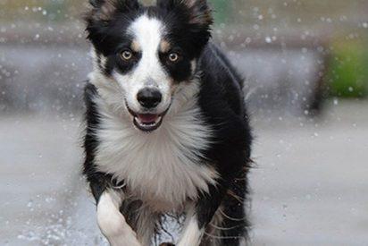 Este perro feliz que se zambulle en una fuente conquista a las redes