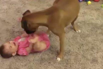 El perro es el mejor amigo del bebé