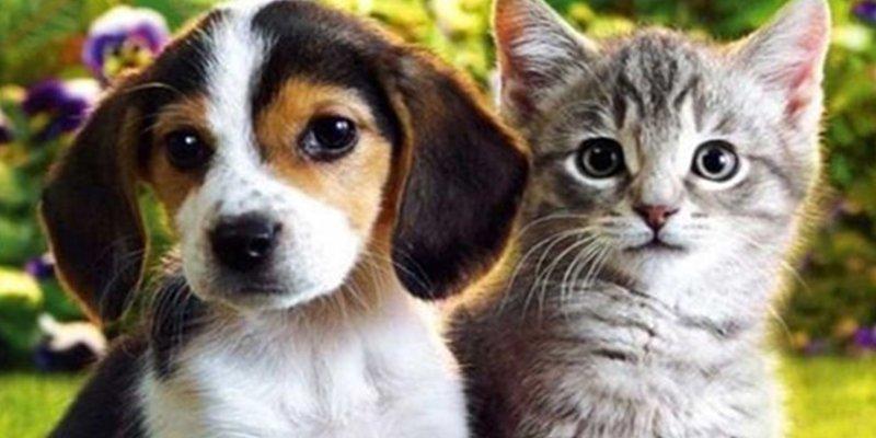 ¿Sabías que los perros prefieren comer grasas, y los gatos carbohidratos?
